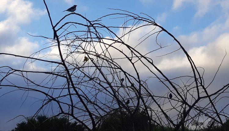 Pássaros silvestres são libertos em área ambiental de Ibiassucê